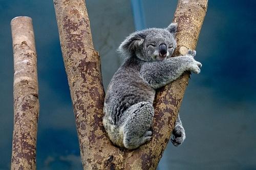 コアラ 袋 臭い