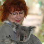 世界でコアラの抱っこが禁止される?