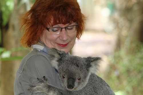 コアラ 抱っこ 禁止