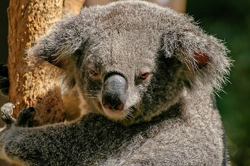動物占い 猿 コアラ 相性